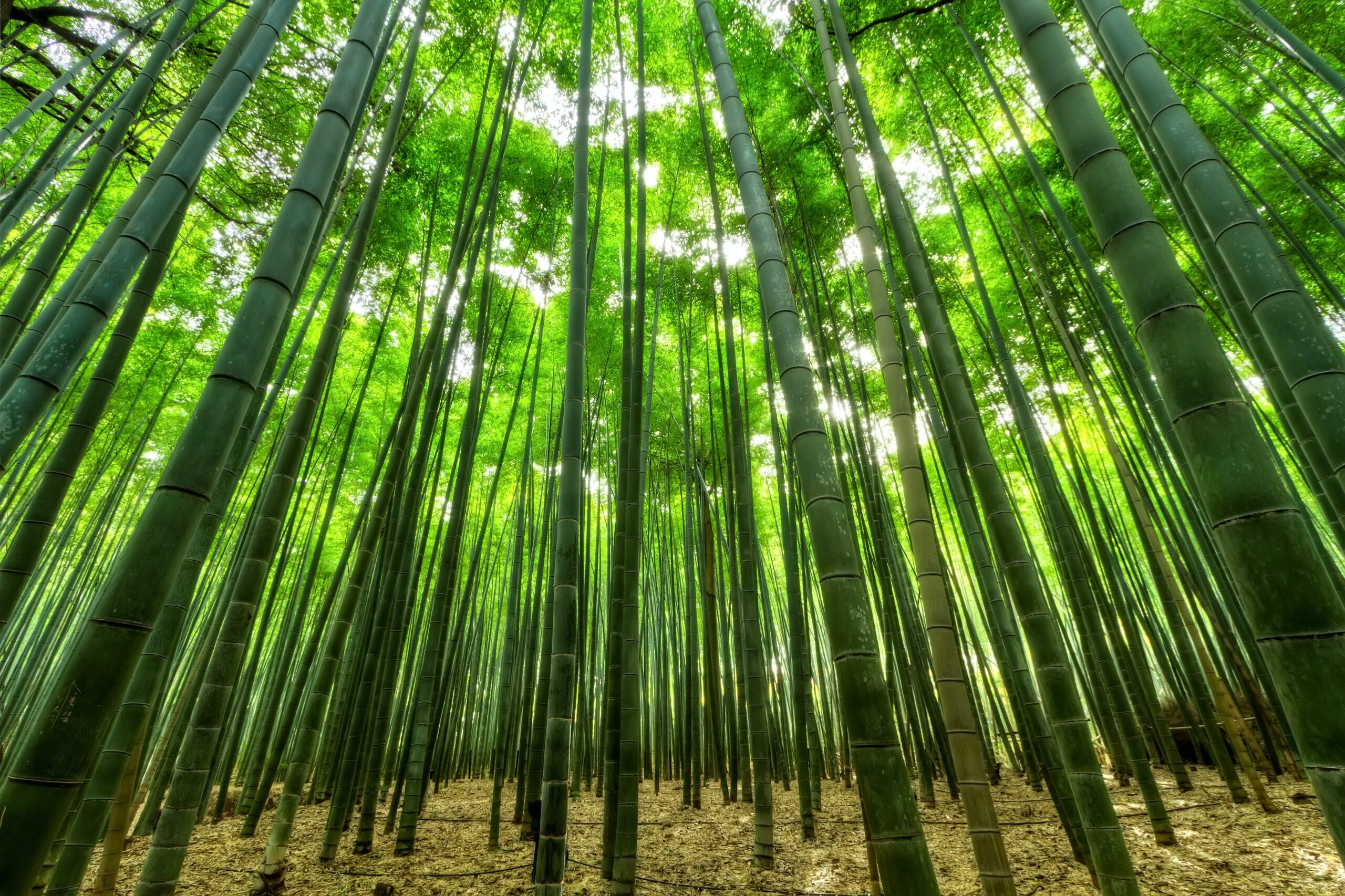 bamboo trees with leafy canopy Photo by Emre Orkun KESKIN from Pexels